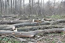 Podél cyklostezky z Kroměříže do Kvasic se kácí nebezpečné stromy.
