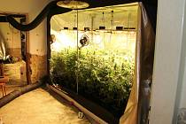 Zásah proti pěstitelům marihuany na Kroměřížsku