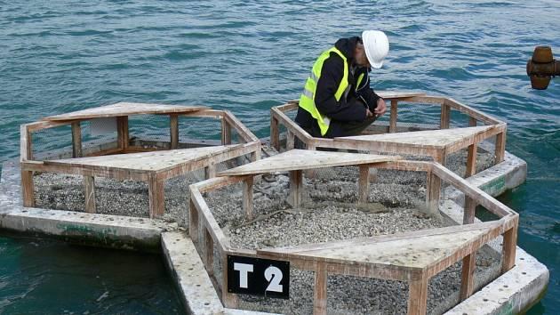 Na troubeckém a hulínském štěrkovišti se v pátek uskutečnil už šestý ročník sčítání a kroužkování rybáků obecných.