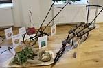 Výstava s názvem O veliké řepě a jak to bylo dál, se věnuje historii hulínského cukrovarnictví.