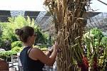 Přípravy na prodejní výstavu Floria Léto 2020. Letos se ponesou v duchu slavností dožínek.