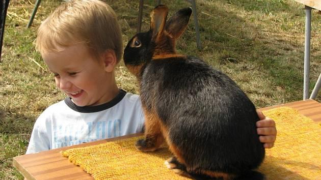 Výstava drobného zvířectva ve Zdounkách.