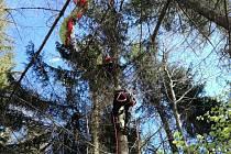 Paraglidista uvízl na stromě ve výšce asi deseti metrů