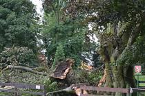 Řádění bouřky, které se v neděli prohnala regionem, odnesl také památný buk červený v holešovské zámecké zahradě, o jeho dalším osudu musejí rozhodnout odborníci.