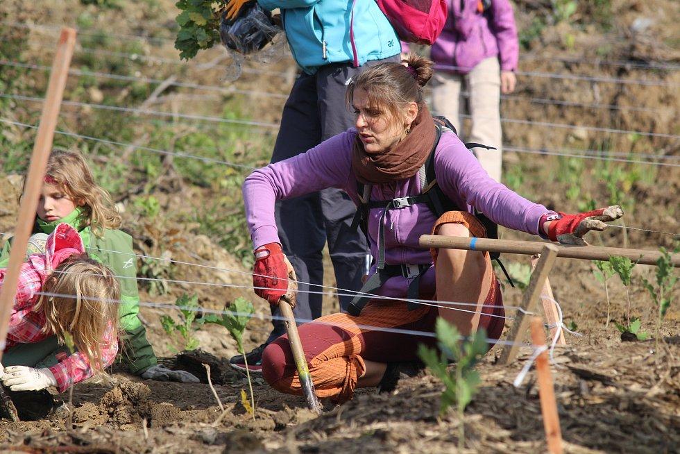 Arcibiskupské lesy a statky organizovaly veřejnou výsadbu mladých stromků na kalamitní holině u obce Rajnochovice.