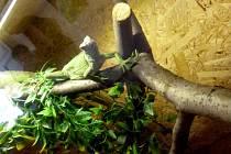 Na zámku v Holešově vystavují jedny z nejzajímavějších a zároveň nejohroženějších živočišných druhů na planetě.