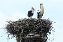 Čápi sídlící na hnízdě v hulínské části Záhlinice jsou už druhým rokem pod dohledem online kamer.