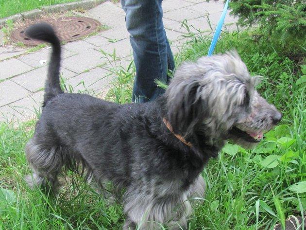 Pejsek Tony je jedním z šestnácti psů z Chvalčova, kteří zůstali na pospas svému osudu. S láskou a ochotou se ho ujala nová majitelka Lucie Blahová z Chropyně.