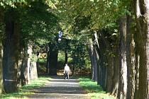 Obec Kvasice obdržela dotaci z Ministerstva životního prostředí na údržbu památné lipové aleje, která se nachází u hřiště. Odborné ošetření provede firma, která vyhrála výběrové řízení. Práce by měly být hotovy do prosince 2012