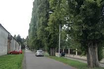Vzrostlé topoly za Květnou zahradou budou pokáceny. Město místo nich vysází v lokalitě nové stromy.