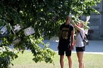 V Podzámecké zahradě je k vidění Filmový strom.