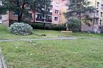 Vyvrácené stromky v Hulíně - následky bouřky 28.7.2020