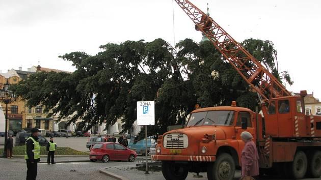 Na kroměřížském Velkém náměstí zasazovali do země v pondělí 24. listopadu 2008 pracovníci technických služeb vánoční strom.