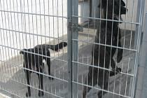 Psi v kroměřížském útulku Čápka. Ilustrační foto