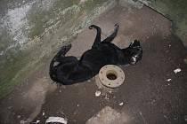 V betonové skruži mezi vodní nádrží Hrubý rybník (Bágrák) a železniční tratí na Zborovice našel kolemjdoucí mrtvého psa většího plemena černé barvy.