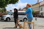 Okrašlovací a zábavní spolek Bystřice pod Hostýnem uspořádal akci na podporu osvěty problémů nevidomých.