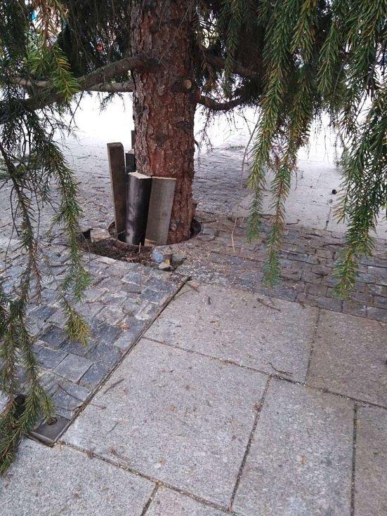 Nový vánoční strom v Holešově. Ukotvení stromu do země.