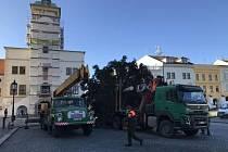 Vánoční strom už stojí na Velkém náměstí.