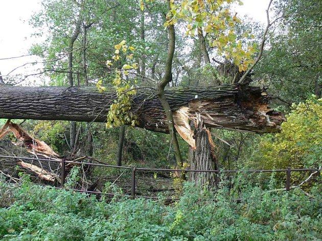 Vyvrácený strom.