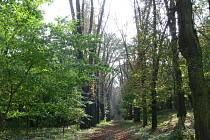 Stromy v koryčanském zámeckém parku jsou v dezolátním stavu. Zhruba osmdesátce hrozí zřícení. Vstup do areálu je zakázán, lidé ho však nerespektují.