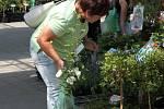 Na výstavišti Floria v Kroměříži mohou návštěvníci po celý týden obdivovat květiny, kaktusy i pomůcky pro všechny vášnivé zahrádkáře.