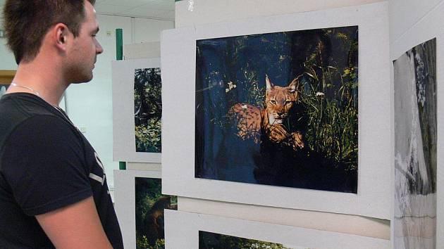 Výstava fotografií šelem