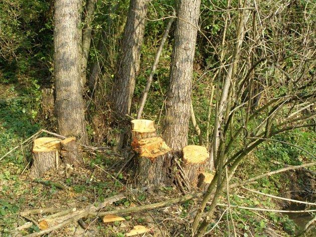 Pokácené a ukradené dřevo