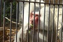Opice v Podzámecké zahradě.