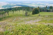 Místy kůrovec mizí, nemá totiž už stromy, které by napadl.