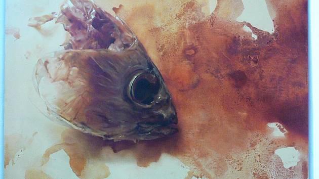 Až do 4. září 2011 je v kroměřížské Galerii Orlovna k vidění výstava Kromě Alenky – Říše za zrcadlem. Jedná se o kolektivní výstavu prací mladých absolventů AVU a FAVU ze sdružení GET ART!.