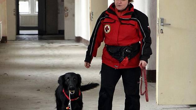 Chantal z Kroukartí, fenka plemena Flat coated retrívr, úspěšně složila se svou majitelkou Dagmar Weissovou už několik záchranářských zkoušek.