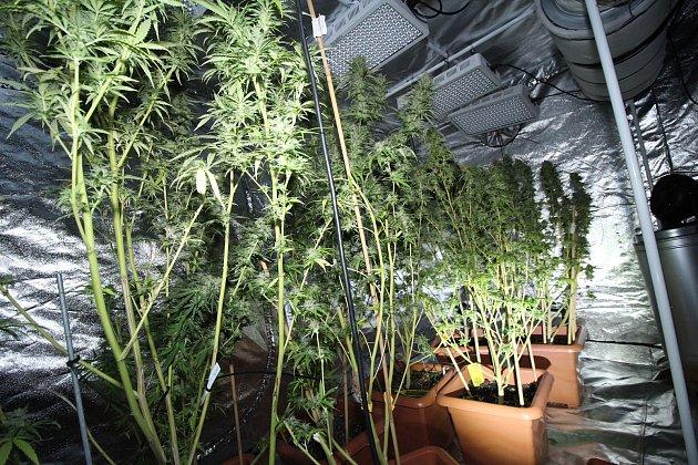 Policisté objevili v holešovském dvoupokojovém bytě rozsáhlou pěstírnu marihuany.