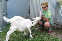 Výstavu drobného zvířectva připravili o posledním srpnovém víkendu chovatelé ze Zdounek.