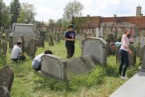 Skupinka dobrovolníků z několika zemí světa už pár dnů dává do pořádku židovský hřbitov v Holešově. Úklidové práce tam provádějí při příležitosti právě probíhajícího Týdne židovské kultury.