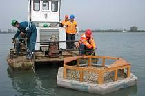 Na rybnících v Hulíně umístili ve středu 27. dubna dvě hnízdiště pro rybáka obecného.
