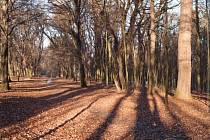 V Zámeckém parku v Koryčanech začalo velké kácení starých stromů a keřů. Na podzim by už tady měla být nová výsadba a zahrada se opět otevře veřejnosti.