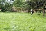 Polámané borovice v hulínském parku - následky bouřky 28.7.2020