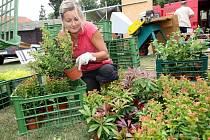 Rostliny prodejci přehledně vystavují a rovaní před očima návštěvníků.