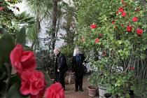 Výstava Kamélie a proměny zahrady ve Studeném skleníku Květné zahrady v Kroměříži.