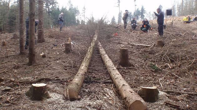SPADL NA NĚJ STROM. Při lesních pracích na muže spadl strom. Příčiny nehody stále řeší Policie ČR.