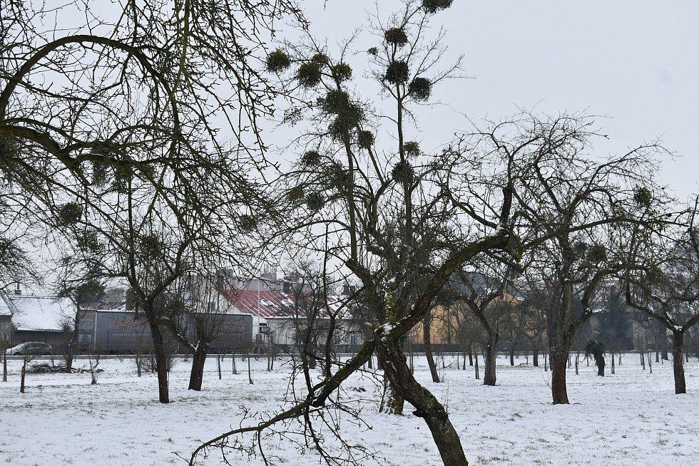 Ovocný sad, který by měl projít letos velkou obnovou.