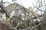 První slunečné dny vyhánějí ze svých domovů i zvířata v Podzámecké zahradě.
