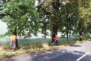 K akci na ochranu stromů jedné kvasické aleje, kterou uspořádala nezisková společnost Arnika, se v pátek připojili i žáci tamní základní školy.