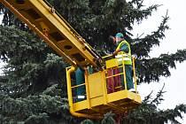 V Holešově vztyčili v pátek 20. listopadu vánoční strom: měří přes osmnáct metrů a pochází z Dobrotic.