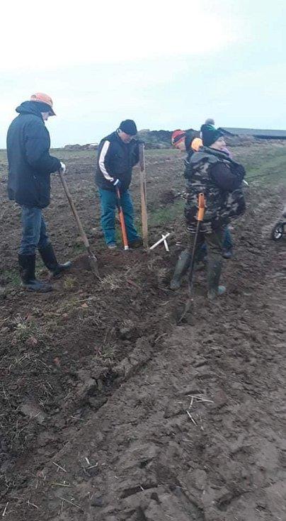 Výsadba nových ovocných stromů.
