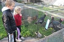 Zahrádkáři připravili v Holešově výstavu drobného zvířectva.