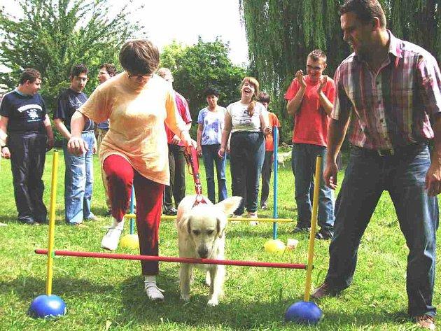 Canisterapeutický pes.