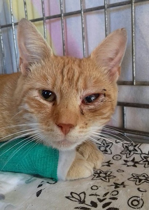 Do útulku Zatoulané štěstí přijímají nechtěné, toulavé či raněné kočky.