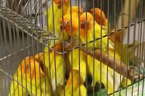 Na výstavišti Floria v Kroměříži se opět konala prodejní výstava drobného zvířectva. Kromě holubů, papoušků, slepic a králíků si návštěvníci mohli koupit třeba i rybičky, hady a cvrčky.