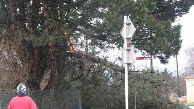 Vichřice vyvracela stromy v celém kraji.